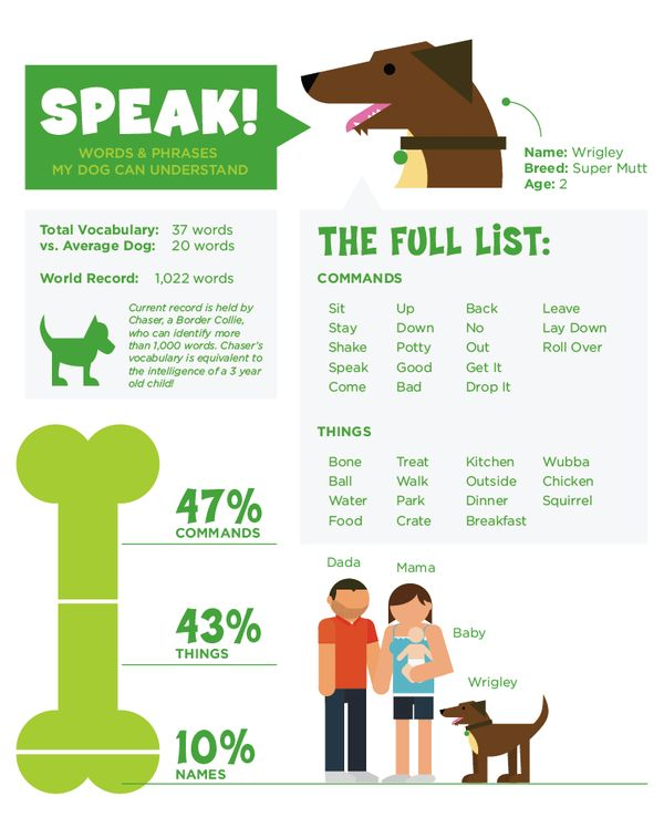 Speak! Words & Phrases my dog understand [daily infographic] | Cool Daily Infographics