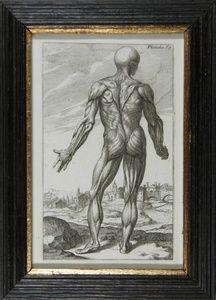 Secunda Musculorum Tabula | Sanders of Oxford