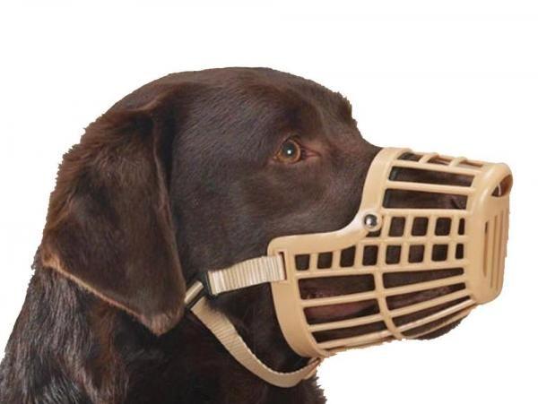 Acostumar o cachorro ao uso da focinheira - PeritoAnimal