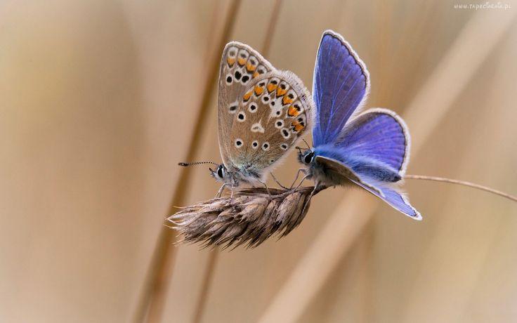 Motyle, Kłos, Trawy
