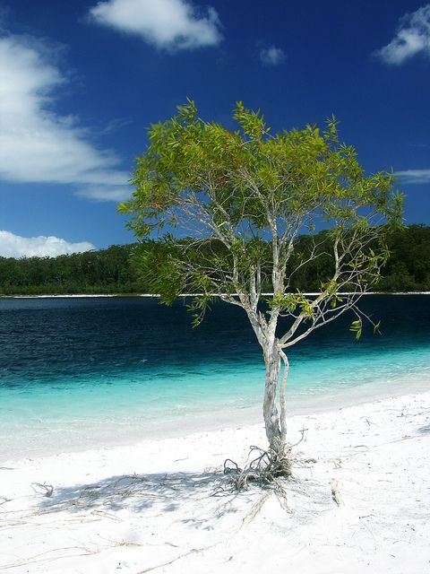 Lake McKenzie - Fraser Island Australia My favorite place on the planet.