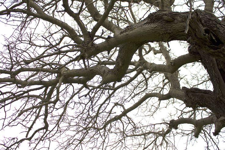 Winter Tree, Rhodes, Greece
