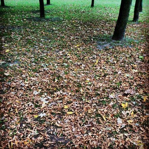 #park #janapawla2  #wilda #poznan #autumn #fall