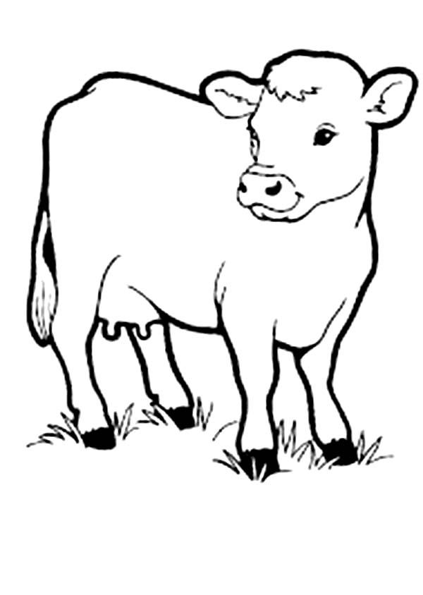 coloring pages of baby cows | Cow, : Picture of Cow Coloring Page | Cow coloring pages ...