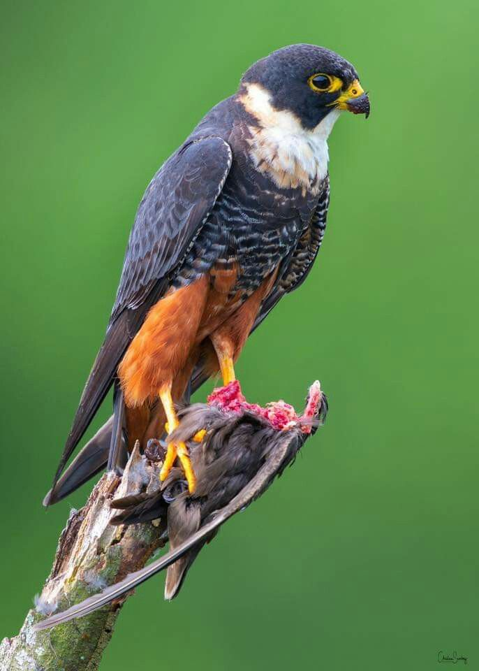 Imagen Sobre Criaturas Hermosas De Praxedes Cano En Aves Hermosas