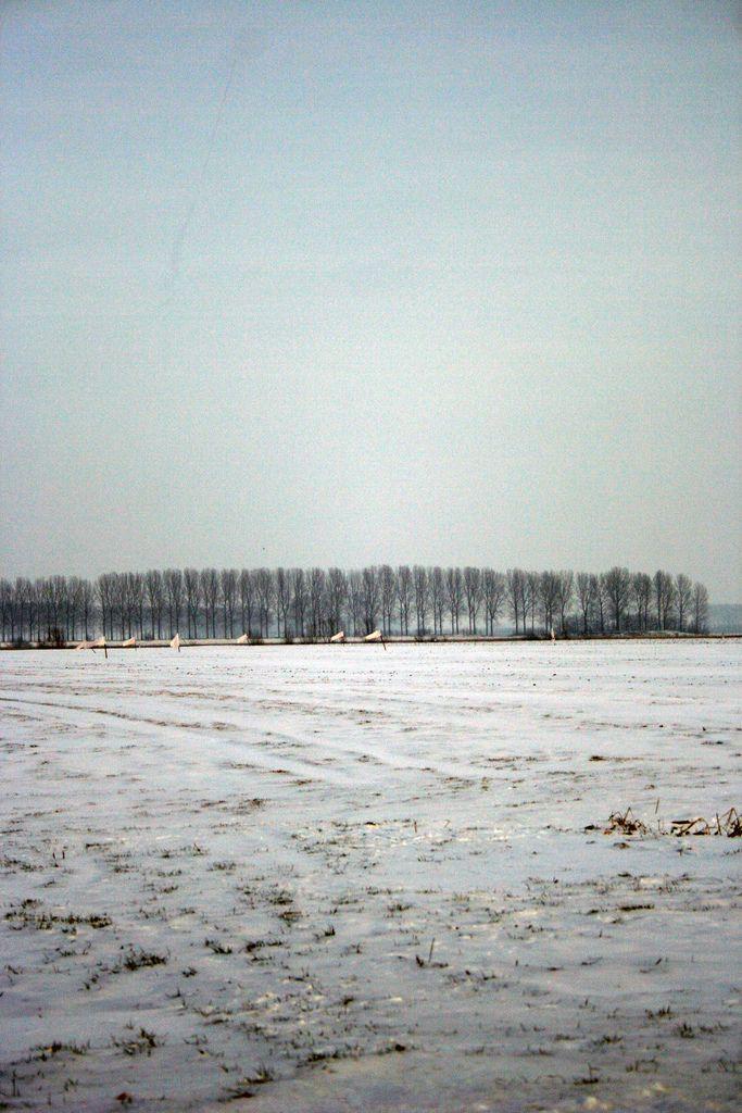 Oostburg, Aardenburg en St. Kruis in Zeeuws - Vlaanderen, Nederland, in de sneeuw. A very white/snowy flat surrounding, love the silence.