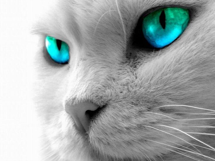 Prettiest Cat Eyes In The World