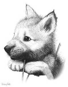 Wolf Pup Drawings - Lots of sketches here
