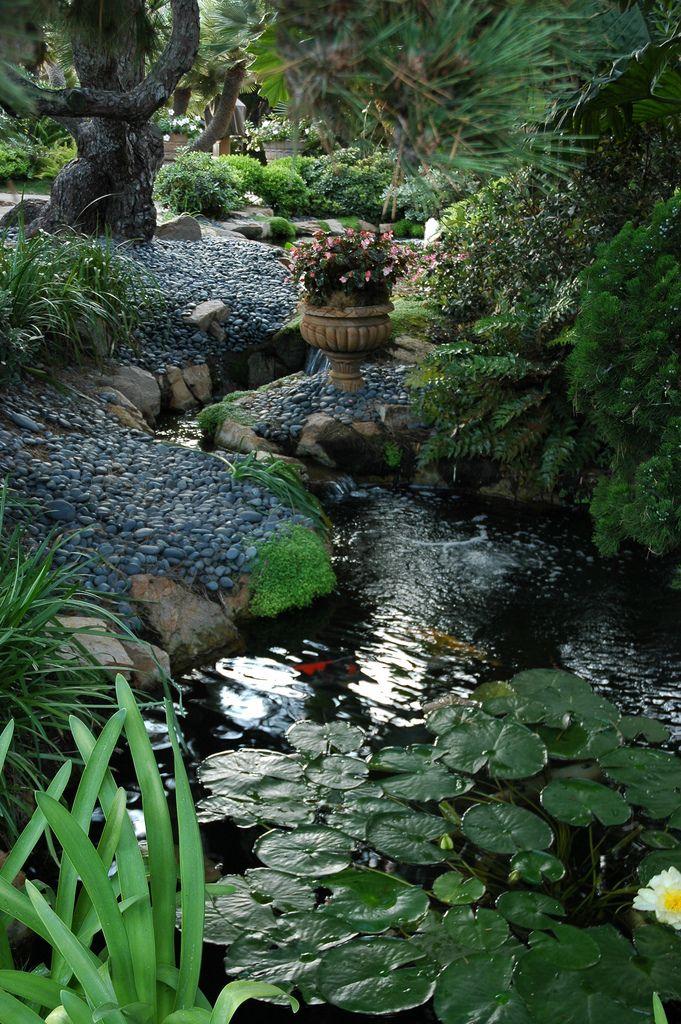 #Meditation garden with a Koi pond and some lily pads, Encinitas, California.