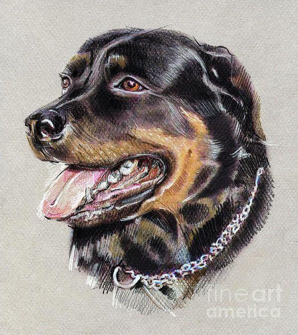 Rottweiler Portrait