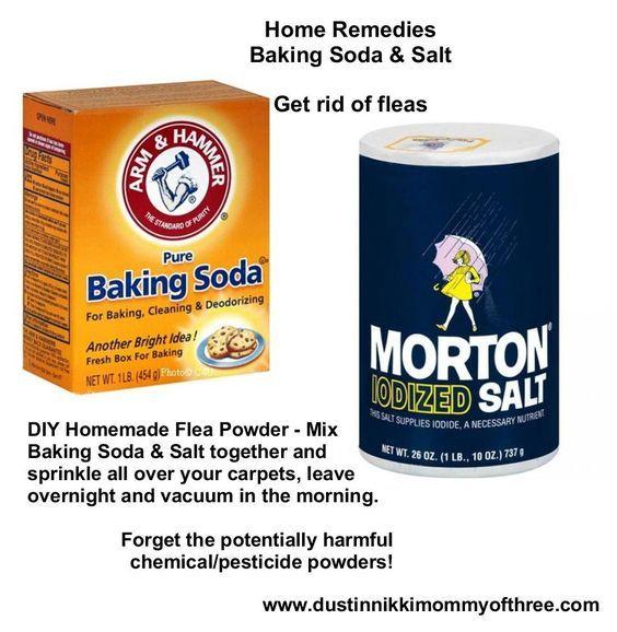DIY Flea Powder for Your Home – Get Rid of Fleas w/o Using Chemicals & Pesticides – Baking Soda & Salt!