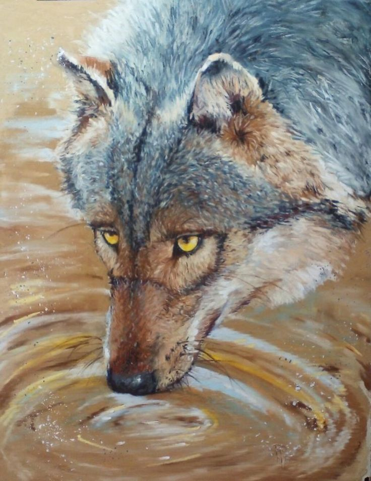 Loups buvant Pastel 30 x 40 samantha Romé