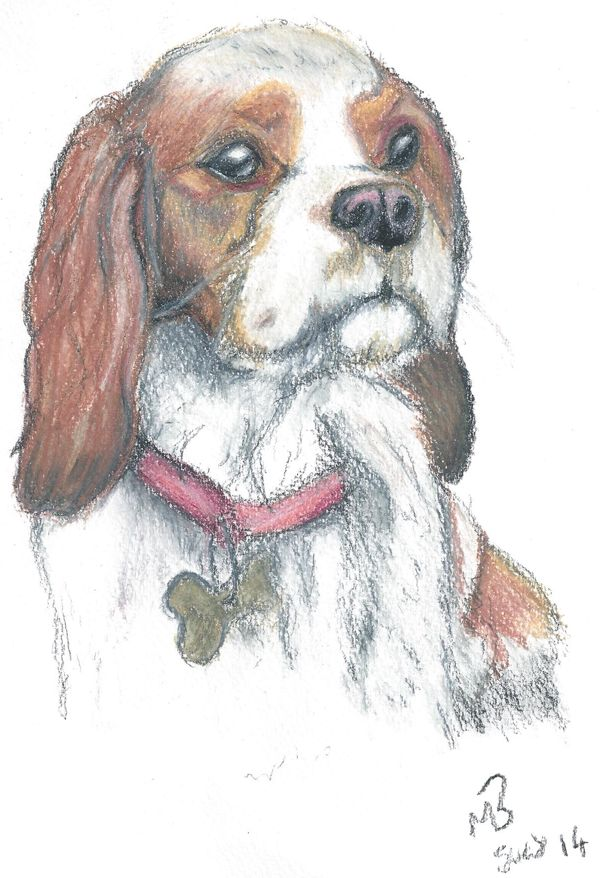 Cavalier King Charles Spaniel dog drawing created using watercolour pencils. #dog #dogs #cavalier #king #Charles #spaniel #art #artwork #artist #pet #portrait