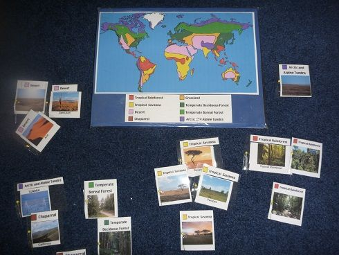 World Biomes Pin Map -  Free download of map and cards and your child put pins to show where the rain forests, deserts, grasslands, forest and tundra regions are located