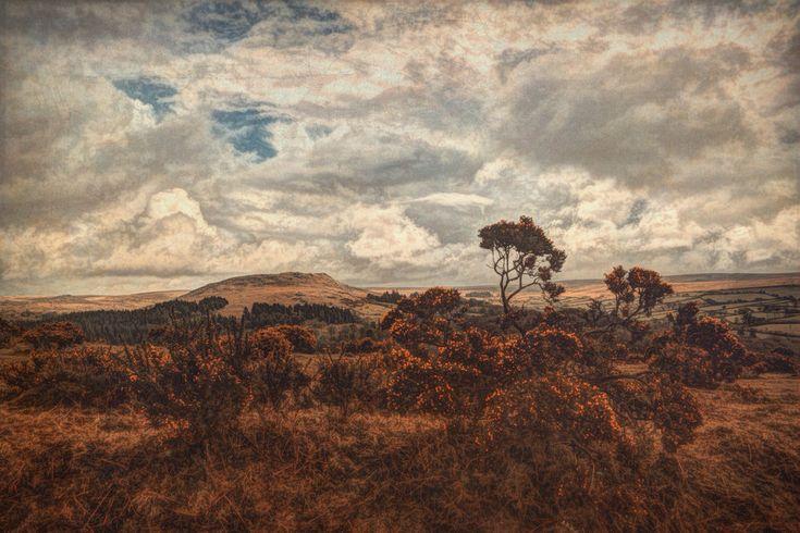 Walking Dartmoor — Sarah Jarrett