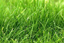 Wann und wie oft Rasen düngen - Anleitung & Tipps