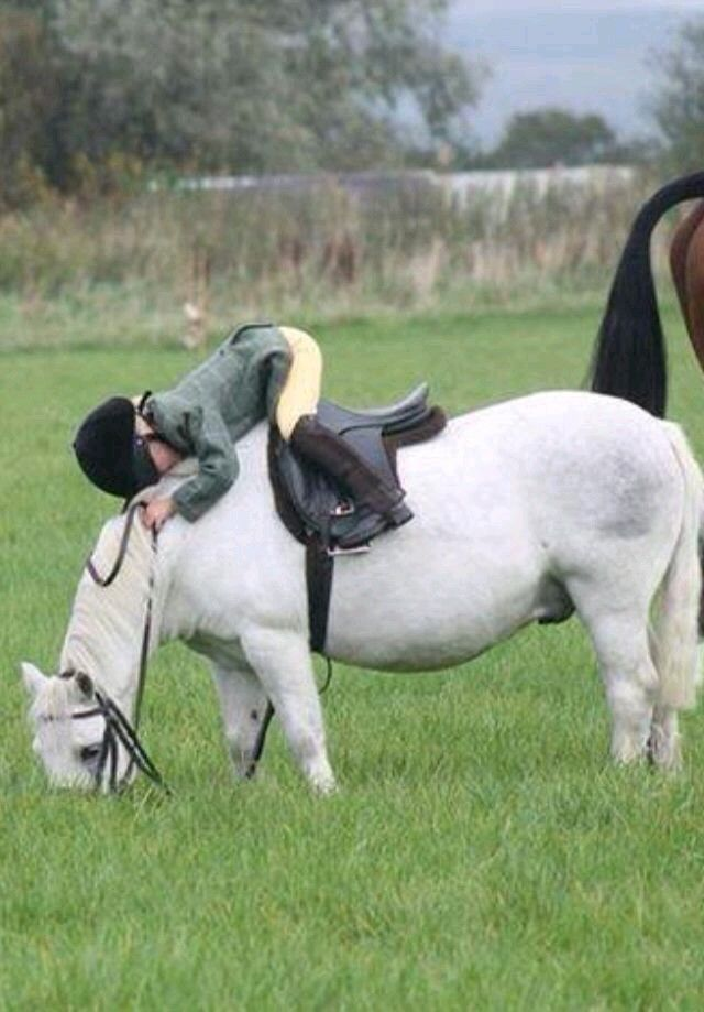 Pin by Maud Peters on Horses & Children | Pinterest | Pony ...