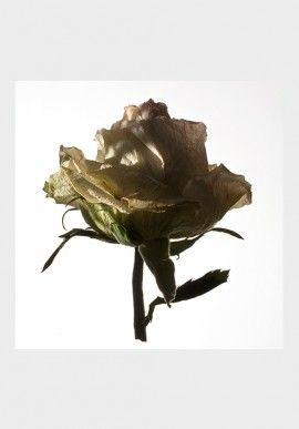 """Photo - """"De rerum natura"""" by Fabio Zonta BUY IT NOW ON www.dezzy.it!"""