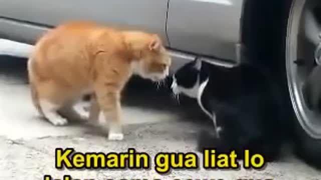 Gambar Kucing Lucu Banget Bikin Ngakak Kumpulan Gambar Lucu Banget Yang Kocak Dan Paling Unik Bergerak Animasi Kartun Ka Gambar Kucing Lucu Kucing Lucu Kucing