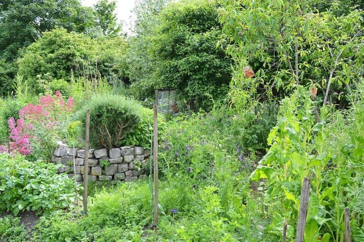 jardin-potager-murs-a-peches-montreuil-radis-rose  Les murs à pêches de Montreuil  18 juin 2013 http://mursapeches.wordpress.com