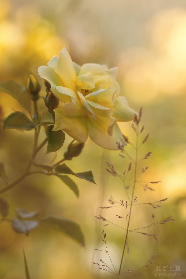 149 Best Floral Roses Images On Pinterest Beautiful Flowers