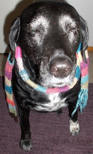 Deejay, my beautiful dog. Kaunis koirani. Min vackra hund.