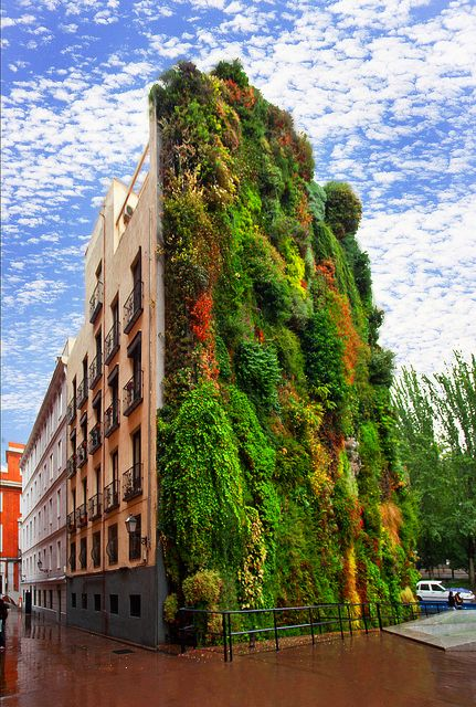 The vertical garden wall outside the Caixa Forum Madrid, Madrid, Spain: