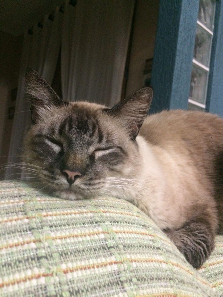 Amo pegar no sono olhando para quem cuida de mim!