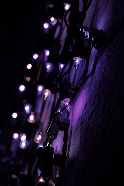 Purple battery powered Christmas lights (found on Amazon) strung from trees perhaps? Mulling it over.