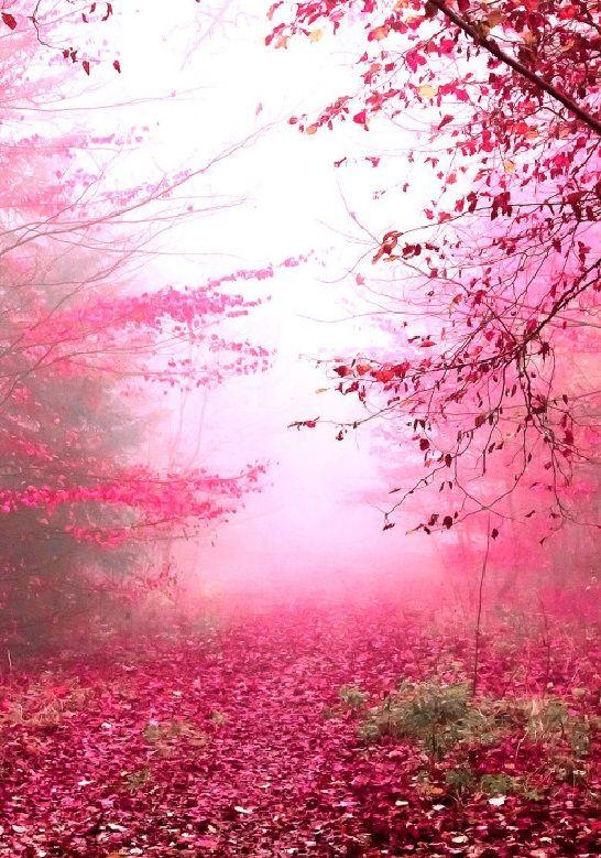 Beautiful Fall Foliage - Fall has arrived...
