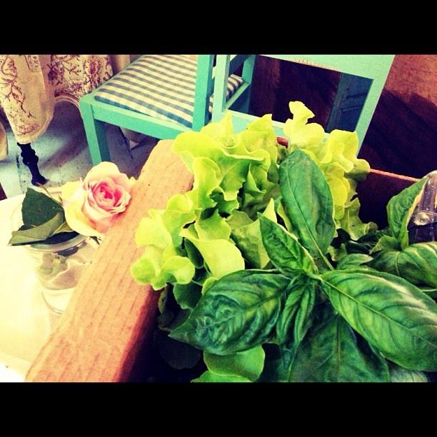 Basil & Lettuce