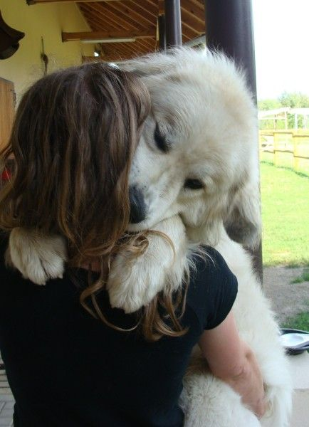 Great Pyrenees ~ nothing like getting a bear hug! Check more at http://hrenoten.com