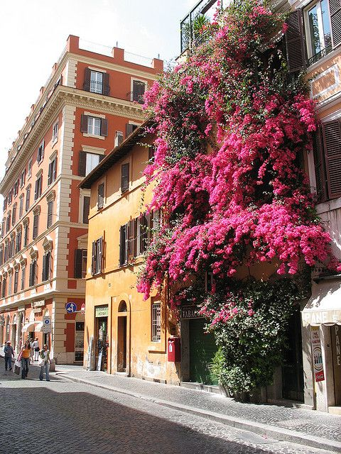 Bougainvilleas invasion in Rome