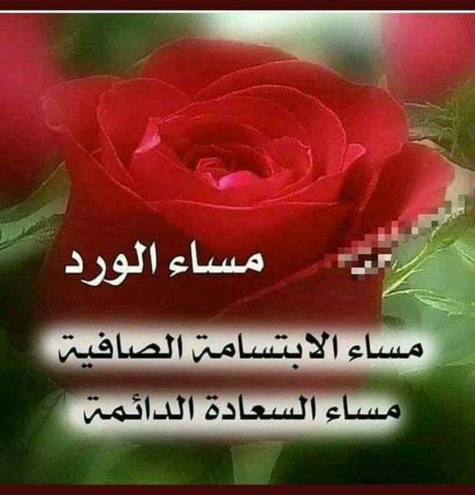 Pin By فلسطينية ولي الفخر On لاجمل عيون بتقرأ مساء الخير Good Evening Dark Red Roses Rose