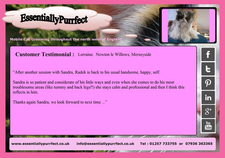 Customer Testimonial of EssentiallyPurrfect #mobile #Persian #cat #catgrooming service. Lorraine #newtonlewillows #merseyside