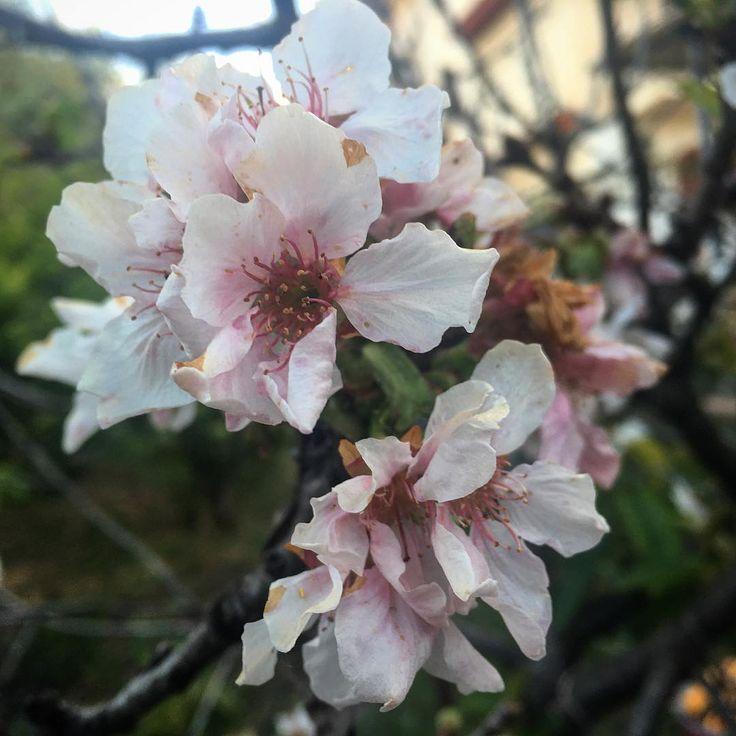 ����❤️ #natura #nature #photography #naturelovers #love #sky #photo #flowers #landscape #instagood #spring #naturaleza #picoftheday #sun #clouds #green #naturephotography #travel #photooftheday #primavera #tree #like4like #beautiful #italia #fotografia #italy #photographer #water #fiori #tramonto http://tipsrazzi.com/ipost/1507460104714007371/?code=BTrkvp2jTNL