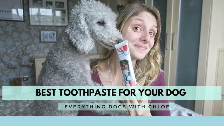 BEST TOOTHPASTE FOR DOGS - REVIEW