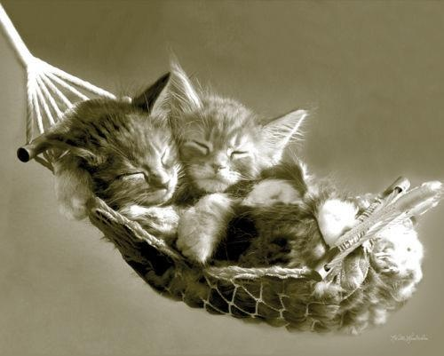 Good night <img src=