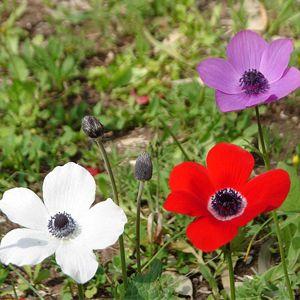 """Képtalálat a következőre: """"flori de primavara"""""""