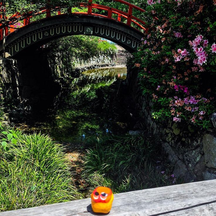 Visiting Shimogamo Shrine! #mizumushikun #kyoto #exploring #visiting #nature #japan #greens #shine #japanese #landscape #river #bridge #rosetree