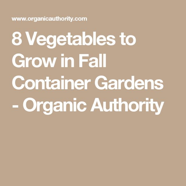 8 Ve ables to Grow in Fall Container Gardens