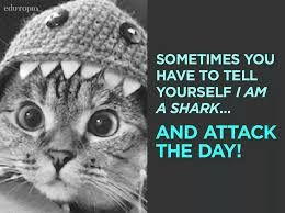 Image result for shark quotes