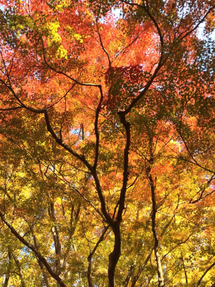 奈良公園 春日奥山原生林