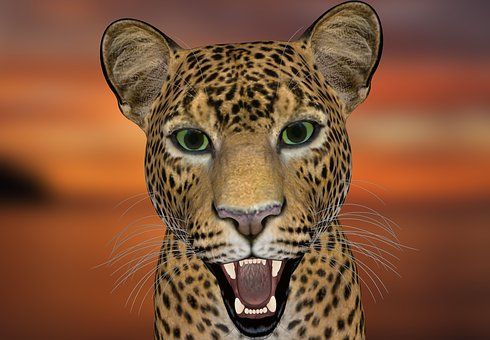 Lampart, Leopard-Head