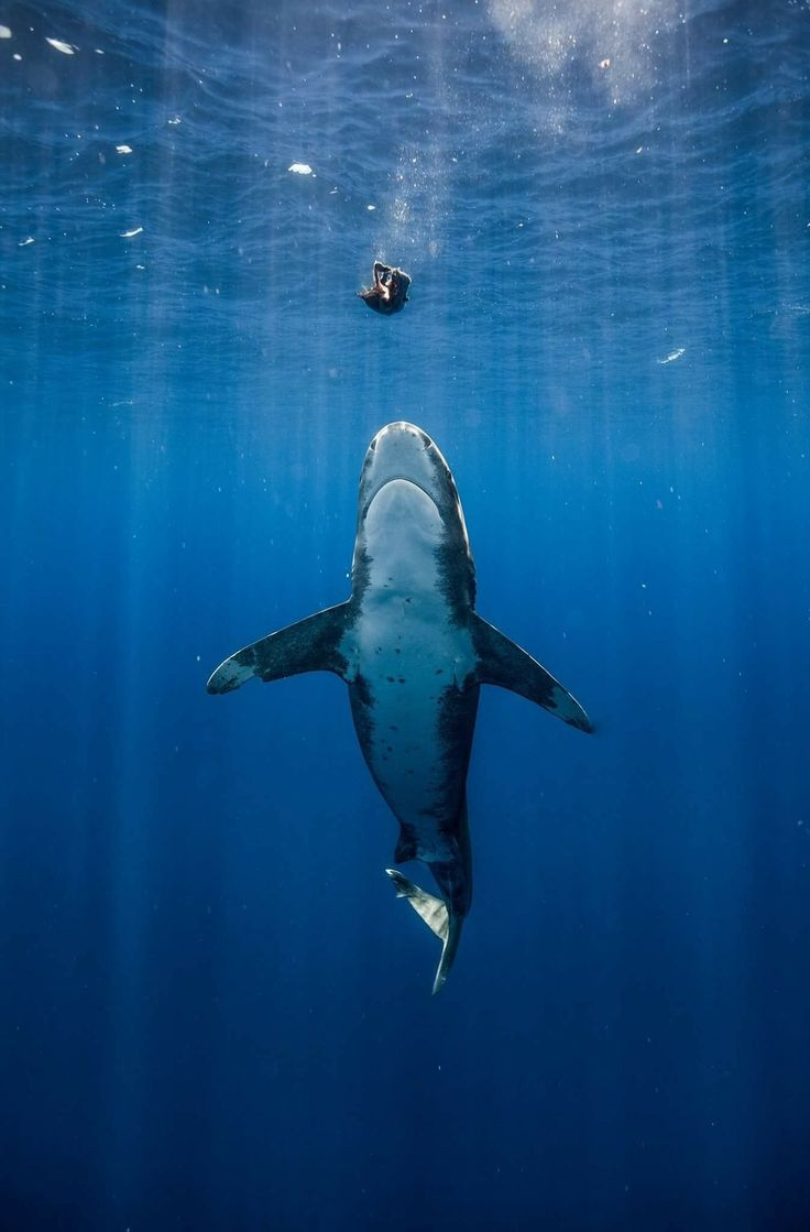 881 best shark images on pinterest shark week great white shark