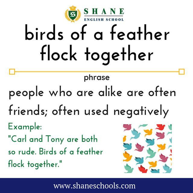 Birds Of A Feather Flock Together People Who Are Alike Are Often