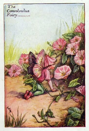 Convolvulus Flower Fairy Vintage Print,  Cicely Mary Barker--printed c.1927 – The Convolvulus Fairy is one of Cicely Barkers Summer Flower Fairies.