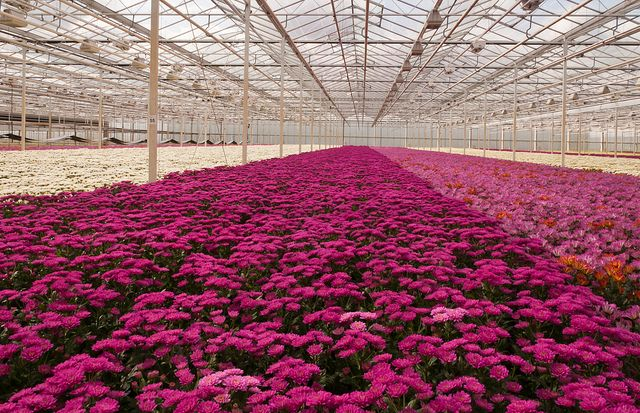 greenhouses netherlands - Google Search