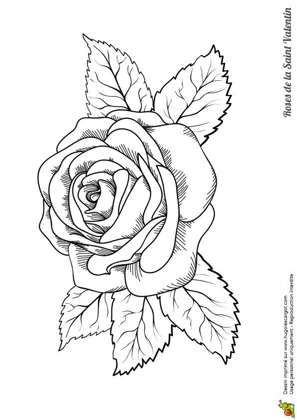 Une charmante rose colorier pour la saint valentin - Coloriage d une rose ...