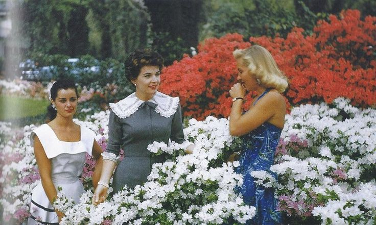 Ann Hart, Polly Bergen (Queen, 1956), and Janet Rudolph, immersed in a sea of azaleas (photo courtesy of the North Carolina Azalea Festival)